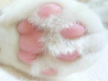狗爪卡通图片