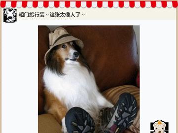 微信头像闺蜜可爱宠物