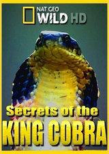 眼镜王蛇之迷