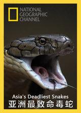 亚洲最致命毒蛇