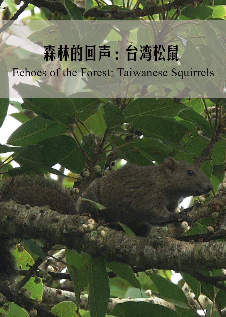 森林的回声:台湾松鼠