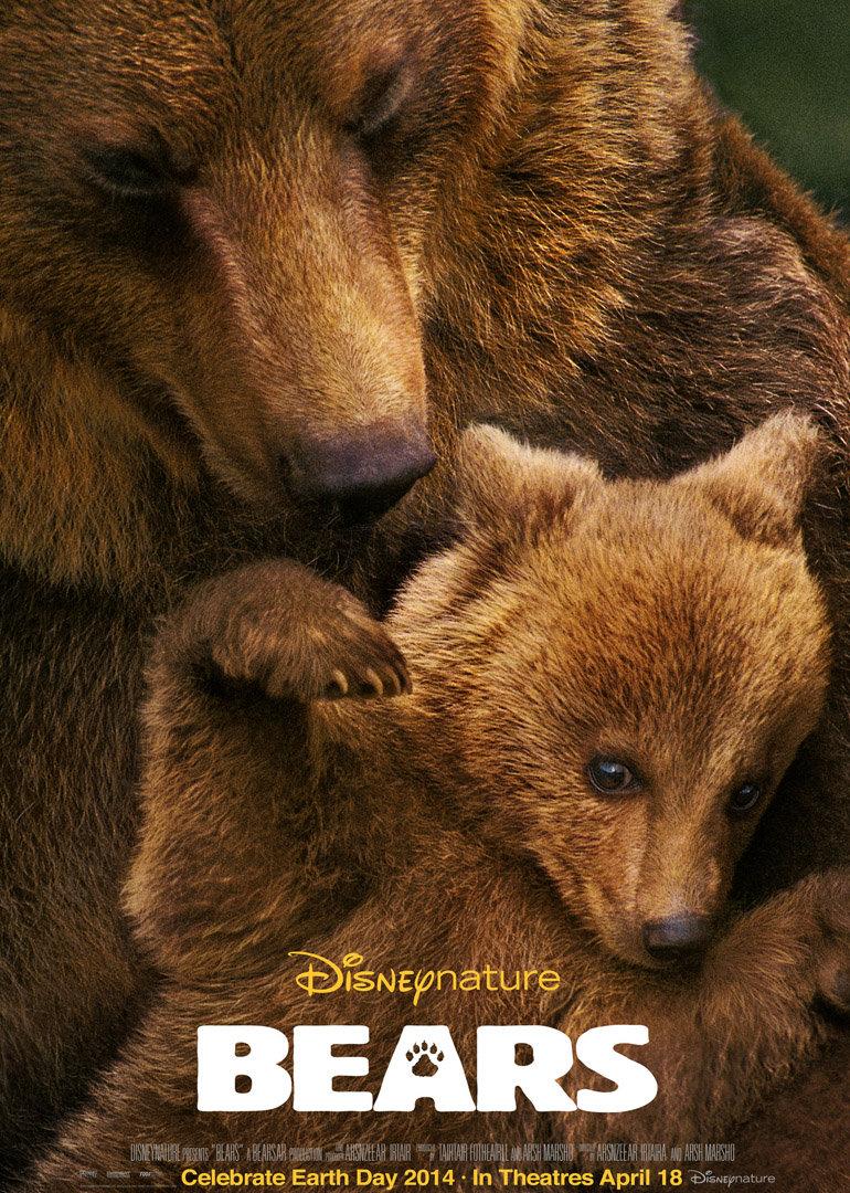 阿拉斯加的棕熊(超清)