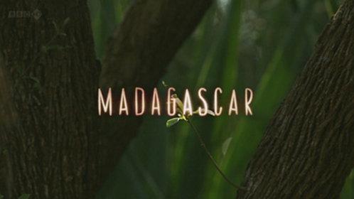 马达加斯加岛