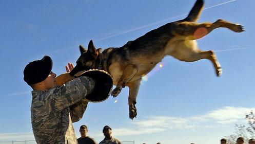 战狼:士兵最好的朋友