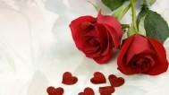 媒体下午茶:红玫瑰与白玫瑰