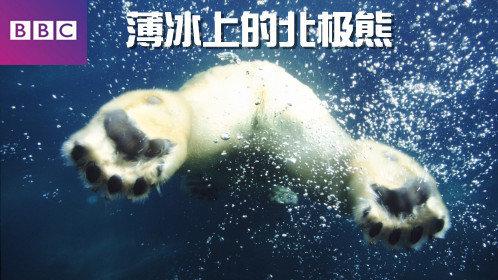 1分 / vip / 自然 喜欢北极熊吗?它们肥嘟嘟,憨态可掬,却优雅且有力.