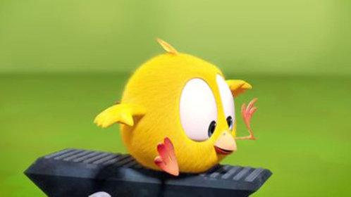 小鸡Jaki在哪儿