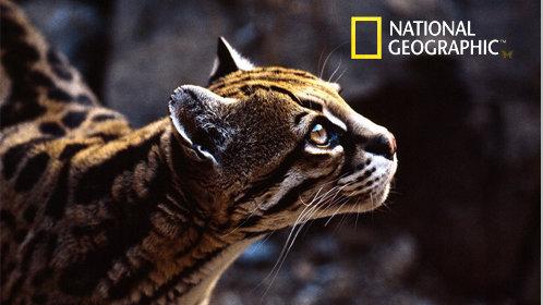 国家地理《动物真性情》