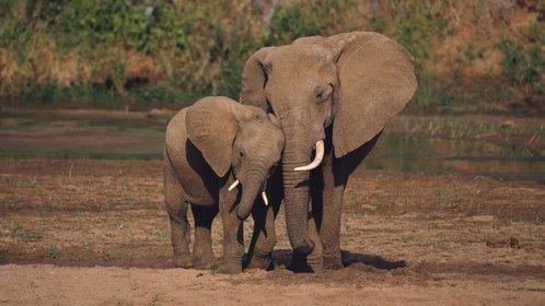 抱歉啊,大象