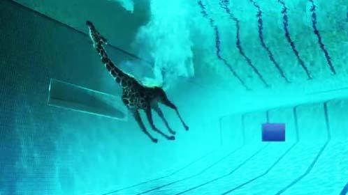 长颈鹿练跳水!动物玩转极限运动