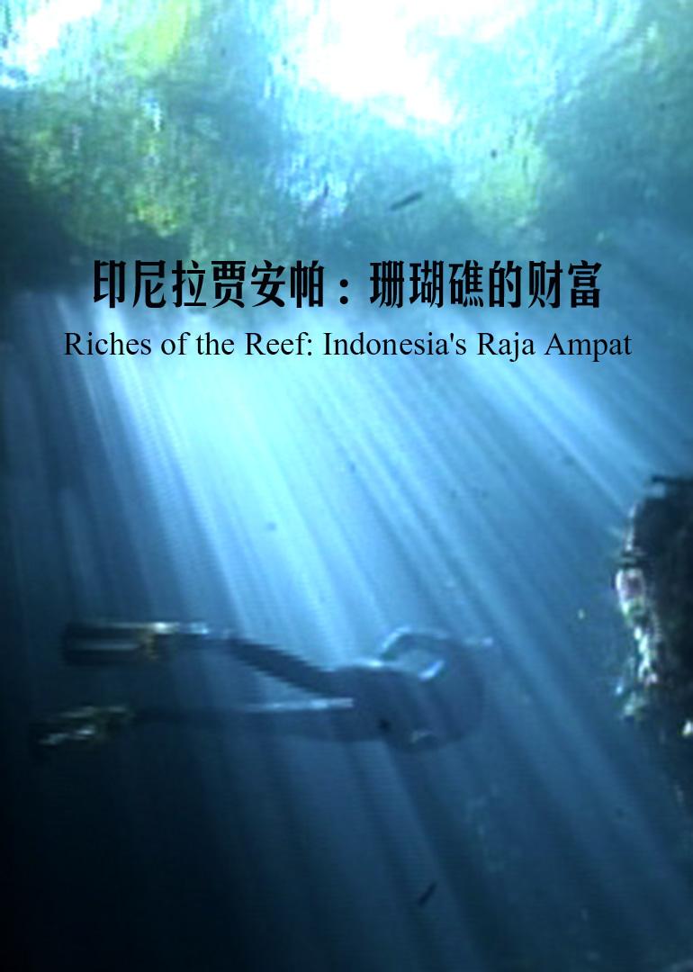 印尼拉贾安帕:珊瑚礁的财富