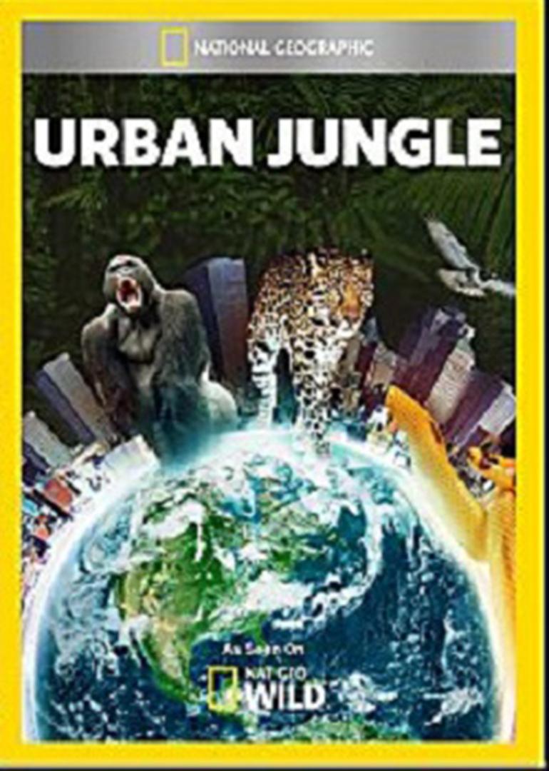 都市丛林生存法则:郊区