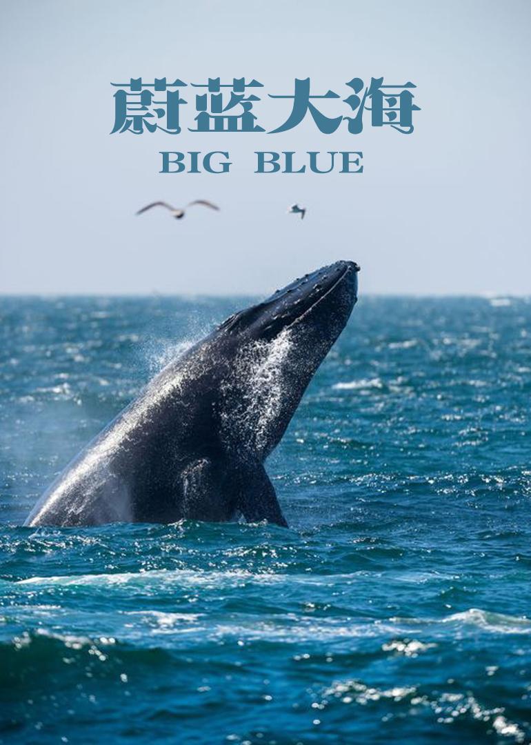 大海里的动物绘本图片