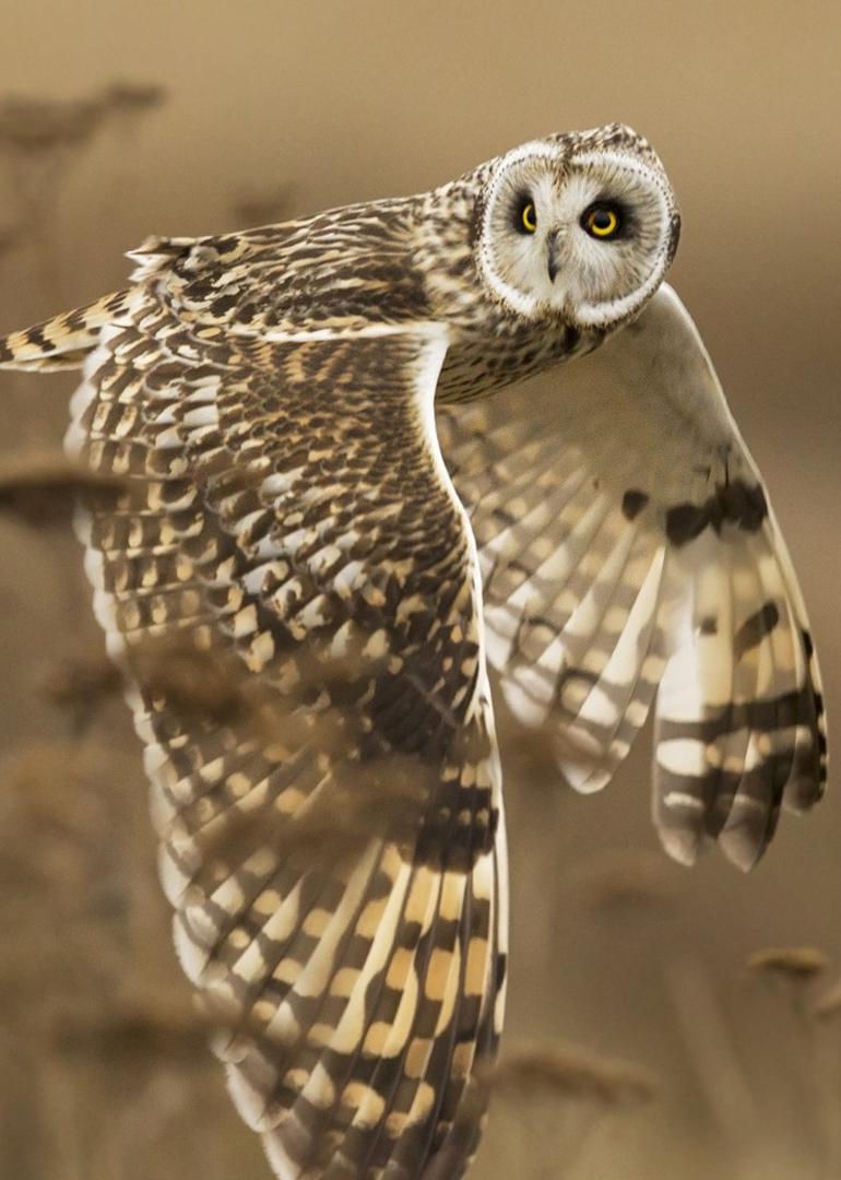 神奇的滑翔动物