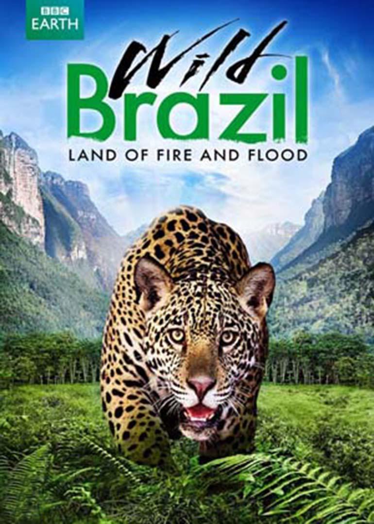 和巴西有关的动物
