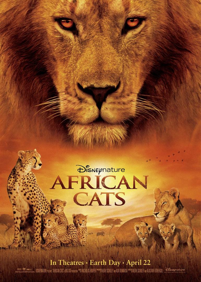 角度来拍摄非洲猫科动物