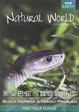 黑曼巴蛇:致命的麻烦